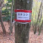 カタコシ峠