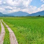 見晴らしを出発して、すぐ尾瀬ヶ原かと至仏山