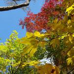 太陽光があると紅葉も鮮やかに
