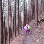 五合目小屋を過ぎて針葉樹林の中を下ります。