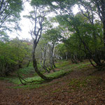 標高850m付近。こんな静かな広がりもあるが、この北側斜面は、トラスト地の位植林地。