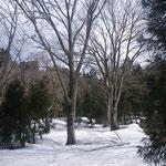 林道付近の雪