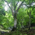 光の中の巡視木②