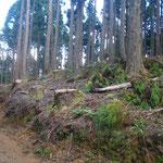 百里トラスト地(麻生林)の伐採現場