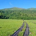 湿原と至仏山
