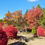 園内の運営施設前の紅葉、真っ赤です