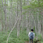 ブナの原生林と