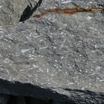 """""""Pteropoden-Pflaster"""" im """"Oberen Zementmergel"""", liegend der """"Sandsteinbank""""; Mergelbruch (Photo Heyng 2003)"""