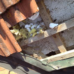 Marderschaden am Dach