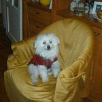 Emociona ver a FREDY, el abuelito caniche, en su nueva vida.