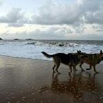 Nuestros perros, dejando atrás el mal recuerdo del abandono.