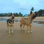 GORDO y KIRA disfrutando, gracias a sus adoptantes, de una gran calidad de vida.