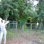 Links oder rechts? Auf in den Regenwald