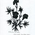 Rose, Diestel, Nelke