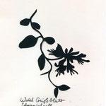 Waldgeissblatt