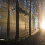Strahlen im Nebel