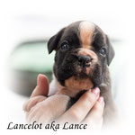 Lance , ne kölsche Jung
