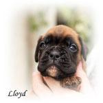 Lloydhat seine Familie gefunden und bleibt ebenfalls in Niedersachsen