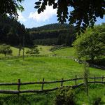 Wald und Wiese - Blick vom Balkon der Ferienwohnung Wiesenblick