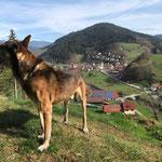 """Blick vom """"Guck a mol Wegle"""" in Oberwolfach auf die Hofanlage"""