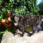 Katze Kathi am Hausbrunnen