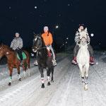 Верховые прогулки на лошадях