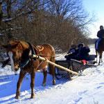 Конные прогулки в санях по лесу