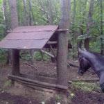 Кормушки для лесных обитателей