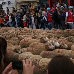 Des milliers de moutons défilent