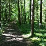Traversée de forêts pour arriver à Périgueux