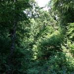 Forêt de Valbonne