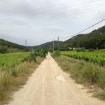 Vignes de Chateauneuf les Martigues