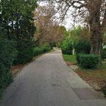 Le parc Saint Cyr
