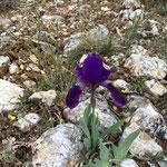 Beaux iris ?