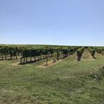 Les magnifiques vignobles bordelais