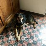 Un chien pèlerin dans le gite de Hagetmau