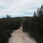Forêt domaniale de la Gardiole