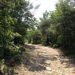 Entrée dans la forêt de Valbonne