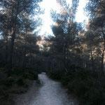 Chemin facile dans le vallon de la Jarre