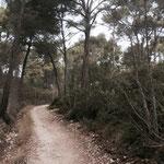 La forêt se densifie