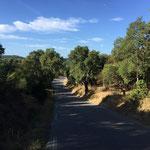 Petite route ombragée