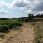 Encore des vignes