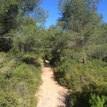 Sentier allant à la crête des Escampons