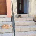 Trois chats sur le perron de la mairie