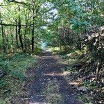 Des agréables chemins forestiers