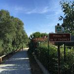 Qui se nomme la presqu'île de Saint-Tropez
