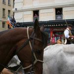 Il y avait heureusement des chevaux entre ces vaches et le public