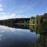 L'étang de Tronçais