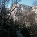 Passage dans une forêt calcinée