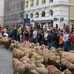 Il y a également quelques chèvres